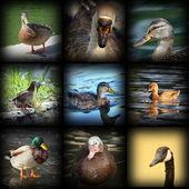 Water birds — Stock Photo