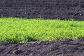 Contrasts on farmland — Stock Photo