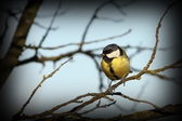 Great tit on a branch in winter — Stock Photo