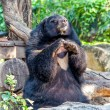 Black bear in zoo — Stock Photo #41258009