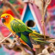 Parrot on Tree Branch — Stock Photo #41258225