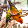 Stock Photo: Parrot on a Tree Branch