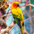 Parrot on a Tree Branch — Stock Photo