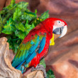 Beautiful macaw — Stock Photo #41258313