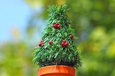 Mini Christmas tree — Stock Photo