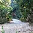 A rural road through a forest in northern of Thailand. — Stock Photo