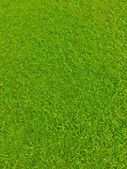Green football field grass — Stock Photo