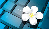 Flower on keyboard vector — Vettoriale Stock