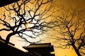 Silhouette of tree in Asakusa temple Tokyo, Japan — Stock Photo