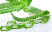 Groene verse aloë vera bladeren — Stockfoto