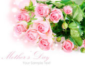 Tender pink roses isolated on white — Stock Photo