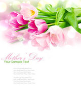 Fresh spring tulip flowers isolated on white — Stock Photo