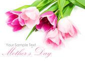 Flores de tulipán manantial aislado en blanco — Foto de Stock