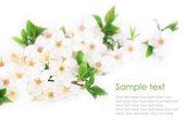 čerstvý jarní květiny — Stockfoto