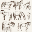 Royalty-Free Stock Vectorielle: Silhouettes of horses