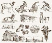 Breeding goats — Stock Vector