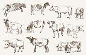 Cow. animal husbandry — Stock Vector