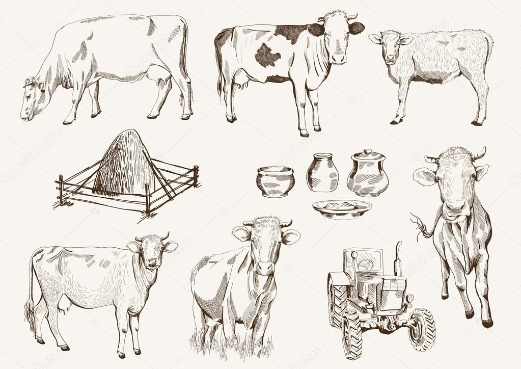 Cow Milk Products Cow And Milk Products Set of