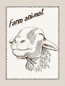 Hodowla owiec — Wektor stockowy