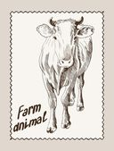 Cow vector hand drawn — Stock Vector