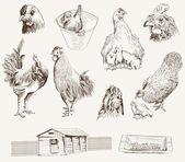 Chicken breeding — Stock Vector