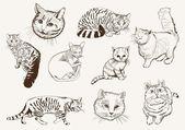 Home pet cat — Stock Vector