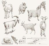 Disegnati a mano capra vettoriale — Vettoriale Stock