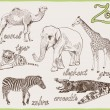 Animals from the zoo — Stock Vector #49513067