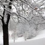 Winter tree on hillside — Stock Photo