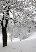 Winter tree on hillside — Stock Photo
