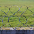 Barbed Razor Wire — Stock Photo