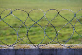 Barbed Razor Wire — Stockfoto