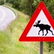 Attention elks crossing — Stock Photo #13859873