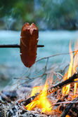 Grill sausage at the campfire — Stock Photo