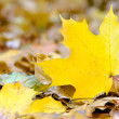Autumn leaf — Stock Photo #15758633