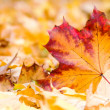 Autumn leaf — Stock Photo #15758671