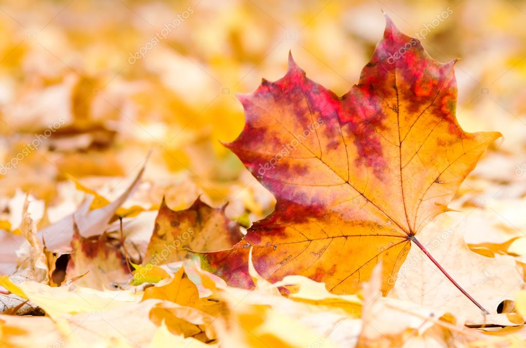 A maple leaf lies on the forest ground — Stock Photo #15758671