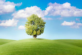 Tree on green meadow before blue sky — Stock Photo
