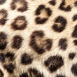 Real Live Leopard Fur Skin Texture Background — Stock Photo