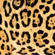 Real Live Jaguar Skin Fur Texture Background - Foto Stock