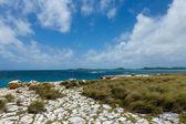Rocky Limestone Coastline at Devil's Bridge Antigua — 图库照片