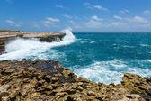 Rocky Coastline near Devil's Bridge Antigua — Photo