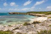Beautiful Rustic Tropical Beach Antigua — Stock Photo