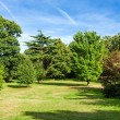 Lush Green Beautiful Woodland Park Garden — Stock Photo