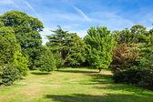 Lush Green Beautiful Woodland Park Garden — Stock Photo