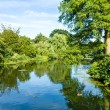 Tranquil Pond Reflecting Lush Green Woodland Park — Stock Photo