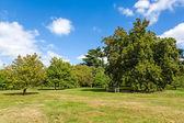 Lush Green Tranquil Woodland Garden in Sunshine — Stock Photo