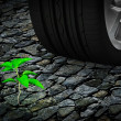 Car wheel next to  small green plant on stone - Stock Photo