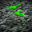 Small plant growing from a stone pavement — Stock Photo #20083013