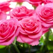Pink rose with water droplets — Stock Photo #38166643